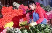 Hoa hồng Đà Lạt tăng giá gấp 3-4 lần trước ngày 20.10