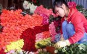 Hoa hồng tăng giá gấp 3-4 lần trước ngày 20/10