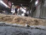 Lò sản xuất chà bông từ thịt gà độn bột mì, bốc mùi hôi thối
