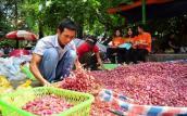 Thương lái ép giá, nông dân Lý Sơn tự đem hành tỏi ra Hà Nội bán