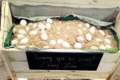 Rầm rộ rao bán trứng gà Đông Tảo đắt 20 lần trứng gà ta