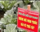 Ngày đầu tiên bán thịt lợn VietGAP ở TP.HCM: Sức mua tăng 30%