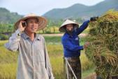 Dịch vụ Nhà nông xanh của MobiFone cập nhật liên tục các thông tin thời tiết nông vụ