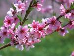 Tết Bính Thân 2016 chưng hoa gì để rước tài lộc, may mắn?