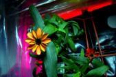 Chiêm ngưỡng quá trình bông hoa đầu tiên nở trong vũ trụ