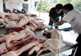 Sốc: Tồn dư chất cấm trong thịt heo gấp 4.700 lần mức cho phép
