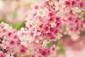 Bí quyết thúc vượng đào hoa chiếu mệnh trong năm 2016