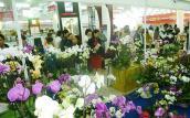 200 doanh nghiệp tham gia Hội chợ xuân 2016 ở Đà Nẵng