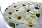 Những loại hoa nên mua chưng trong nhà dịp Tết để tăng may mắn