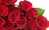 Valentine 2016: Tuyệt chiêu chọn hoa hồng tặng bạn gái