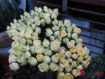 Khan hiếm, hoa hồng Valentine tăng giá mạnh