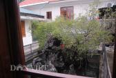 Sự thật  về kho báu chôn dưới gốc cây sanh giá 14 tỷ ở Huế