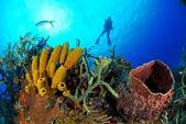Nga điều chế thuốc chống ung thư dựa trên bọt biển