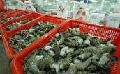 Xâm nhập mặn 'kéo' giá tôm, cá xuất khẩu giảm mạnh