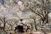 Những mùa lúa, mùa hoa tuyệt đẹp ở Việt Nam