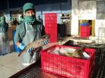"""""""Vỡ mộng"""" xuất khẩu cá nóc"""