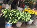 Hoa loa kèn rộn ràng xuống phố gọi mùa hè