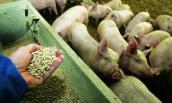 Từ năm 2018 cấm sử dụng kháng sinh trong chăn nuôi