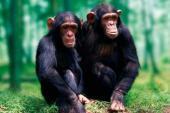 Top 10 động vật thông minh nhất thế giới