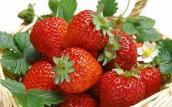 Cách đơn giản giảm nhẹ thuốc trừ sâu trong rau quả mua ngoài chợ