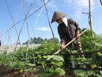 Cơ hội cho nông nghiệp hữu cơ