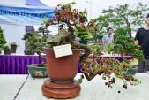 Suýt xoa dàn cây ăn quả bonsai tuyệt đẹp ở Thủ đô