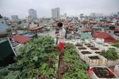 Độc đáo vườn-ao-chuồng giữa Thủ đô của chàng trai 9X