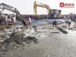 Video: Ngư dân vỗ về, dội mát chú cá voi 15 tấn mắc cạn ở bãi biển