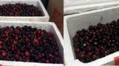 Vụ thùng cherry của khách