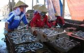 Phát hiện 30 tấn cá nục có chất cực độc, tuyệt đối cấm