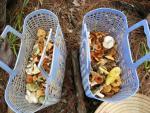 Nấm gan bò gần triệu đồng/kg, đại gia Hà Thành tranh nhau ăn