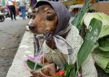Trào lưu để chó ngồi bán hàng gây sốt ở Trung Quốc