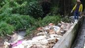Tin an toàn thực phẩm hot 24h qua: Xác lợn chết 'ngụp lặn' trên sông Sài Gòn