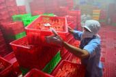 Doanh nghiệp thực phẩm liêu xiêu vì tin đồn thất thiệt và những sự cố 'giời ơi'