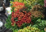 Dân Hà Nội đang ăn chôm chôm đắt gấp 8 lần