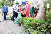 Người Sài Gòn trồng rau sạch ươm sẵn cho khỏe