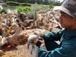 Kinh ngạc trang trại có vịt nuôi sướng như tiên, ăn sang ở sạch