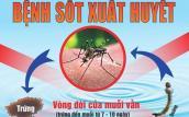 TP.HCM có thêm 1 nạn nhân tử vong vì sốt xuất huyết ở Hóc Môn