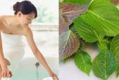 Bất ngờ với công dụng của loại lá này, giúp da bạn trắng mịn mà vô cùng tiết kiệm
