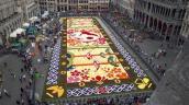 600.000 bông hoa tạo nên thảm hoa khổng lồ ở Bỉ
