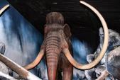 Hình ảnh hoang tàn trong công viên khủng long bị bỏ hoang