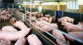Hãi hùng hóa chất độc hại vẫn tuồn vào trong chăn nuôi