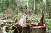 Kiến nghị thu hồi dự án Khu du lịch sinh thái thác Lưu Ly