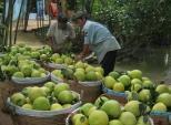 Những loại quả thuần Việt chính vụ vào mùa thu