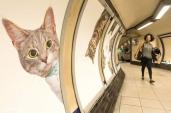 Ga tàu ở Anh thay tất cả quảng cáo bằng hình mèo