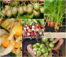 Loạt cây tí hon khiến ai trồng cũng thích mê