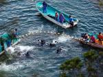 Nhật Bản vào mùa săn cá heo đầy tai tiếng