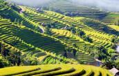 Truyền hình Đức làm chương trình về đất nước, con người Việt Nam