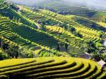 Truyền hình Đức làm chương trình về đất nước, con người Việt