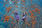 Du lịch xứ hồng để cảm nhận hương vị mùa thu từ Bắc đến Nam